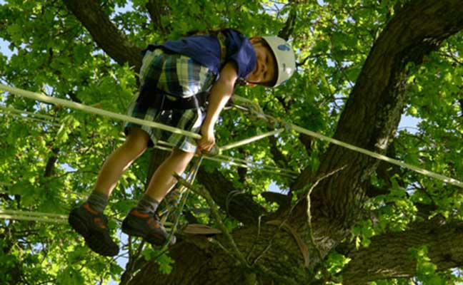 The Great Big Tree Climbing Company